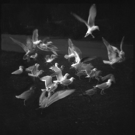 Flight, II