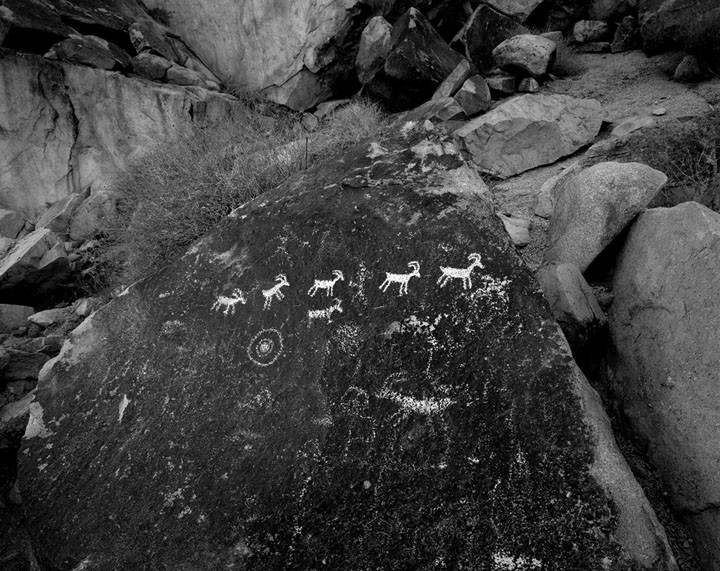 Sheep Petroglyph, Nevada