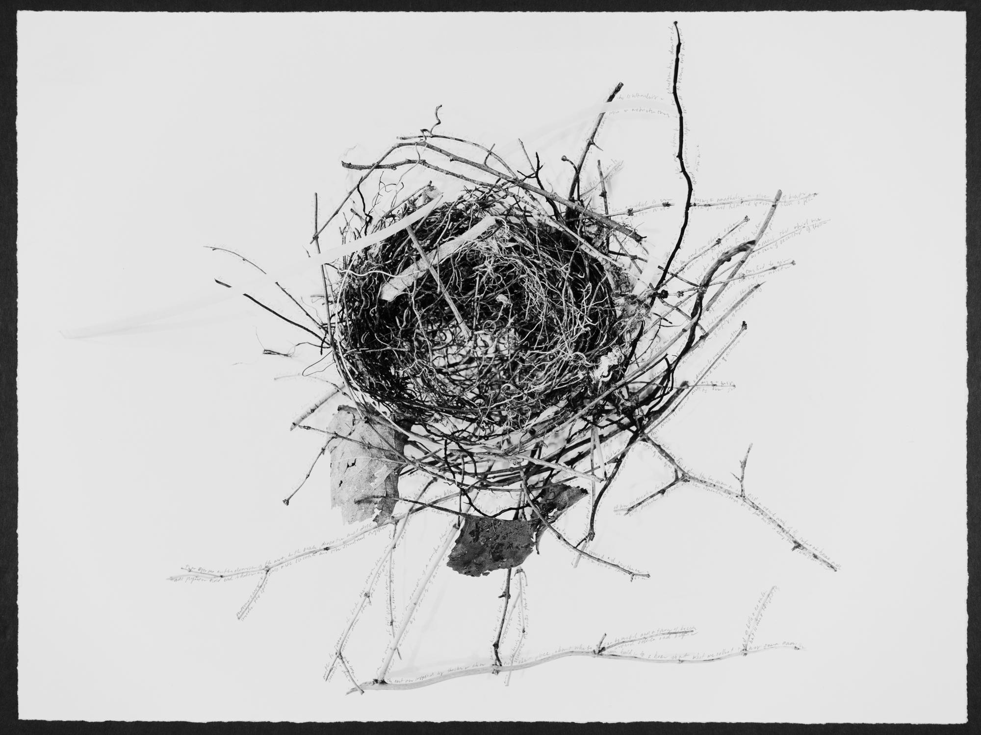 terri warpinski, Nest, A  Poem for the  Abject