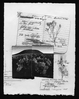 Great Basin Flora