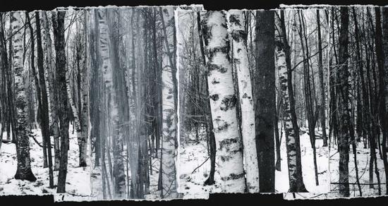 Birches, II