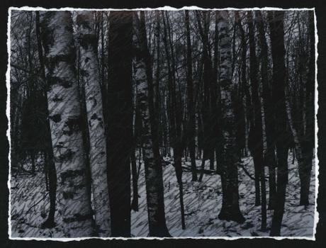 Birches, III (Nocturne)