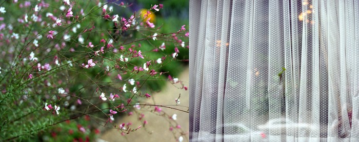 Flower/Curtain, 2004