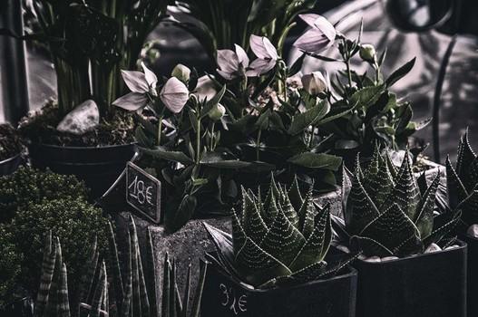 PARIS PLANTS AND FLOWERS