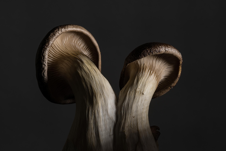 Greg Heins, Two Mushrooms (738)