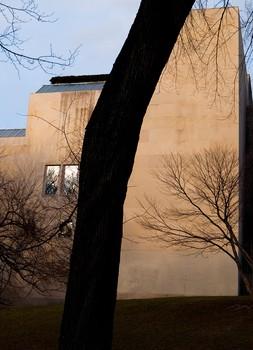 Met. Museum Tree