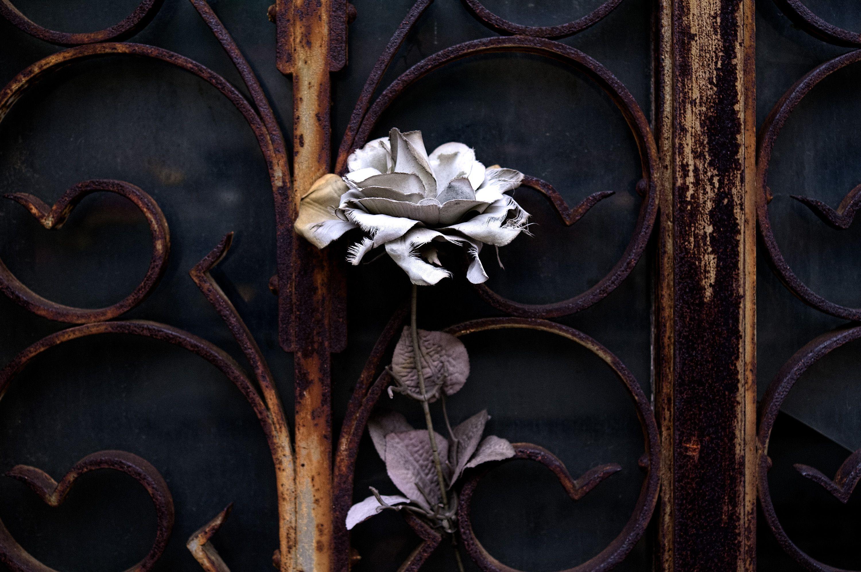 Greg Heins, Cemetery flower (2075)