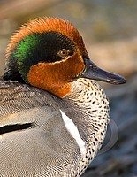 Green Teal Portait