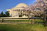 Cherry Blossoms around Jefferson Memorial
