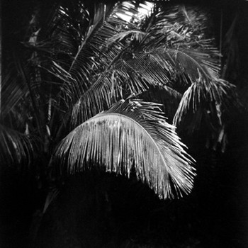 Palm Leaves, NaPali