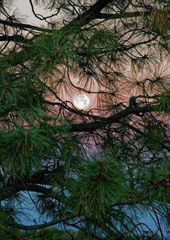 Moon in Ponderosa