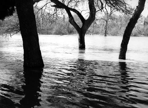 Flooding below Prado Dam, 2005