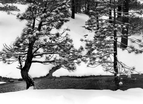 Snow Fork, San Bernardino National Forest, 2003