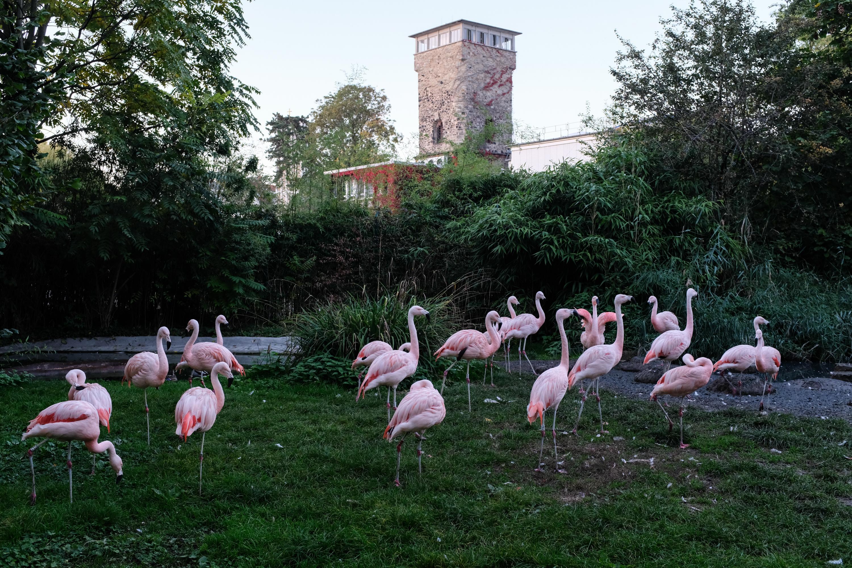 Alan Thomas, Zoo, Frankfurt