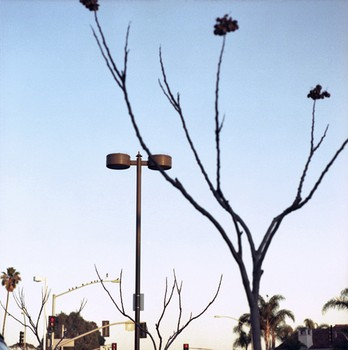 Pigeons and Lamps, Fairview