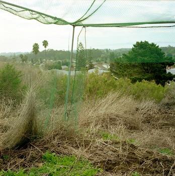 Veiled Vista, Goleta