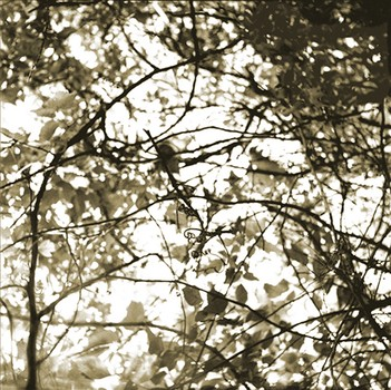 Canopy Twist, Austin, Texas