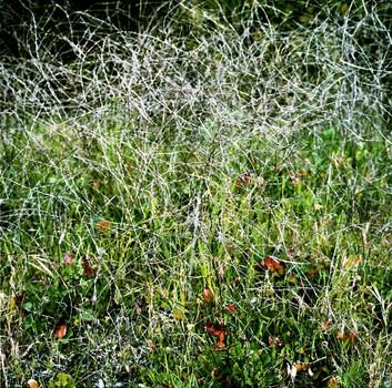 Green and Grey Weeds, Goleta, California