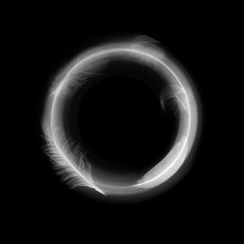 Feather Enso
