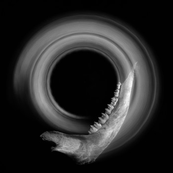 Deer Jaw Enso