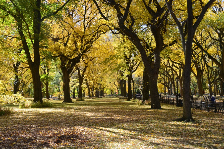 Central Park trees in fall