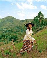 planting sticky rice