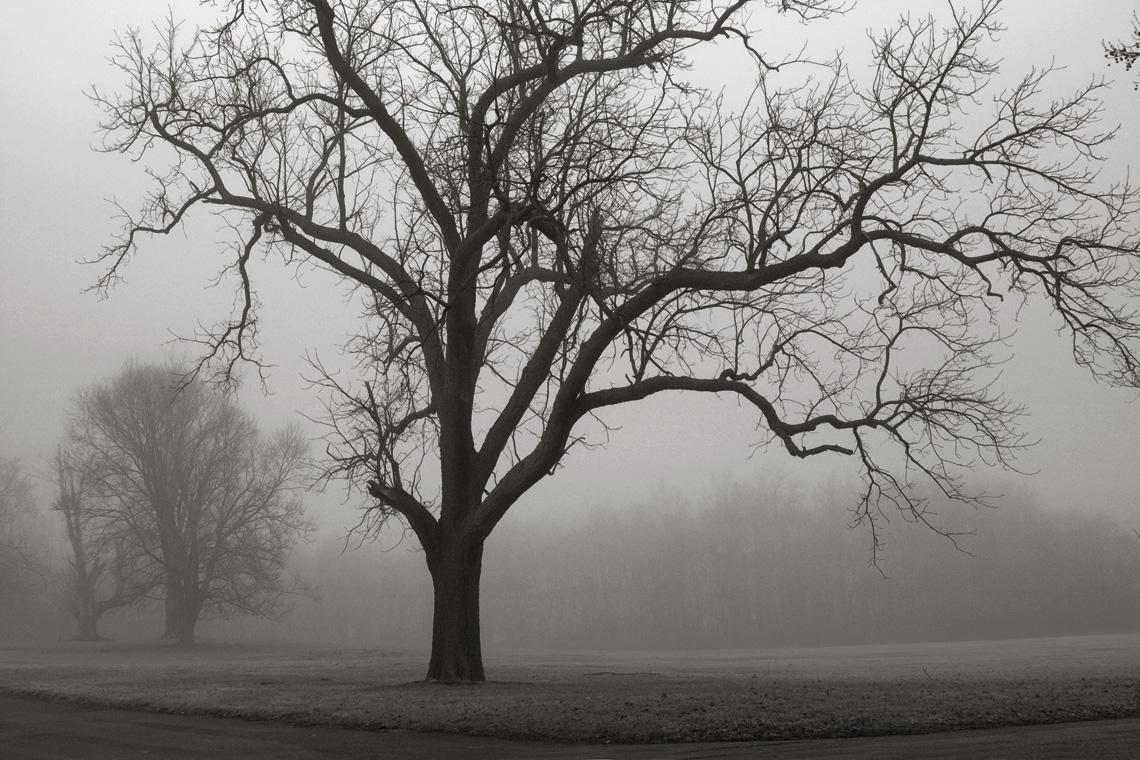Jacqueline Slavney, Fog at Druid Ridge