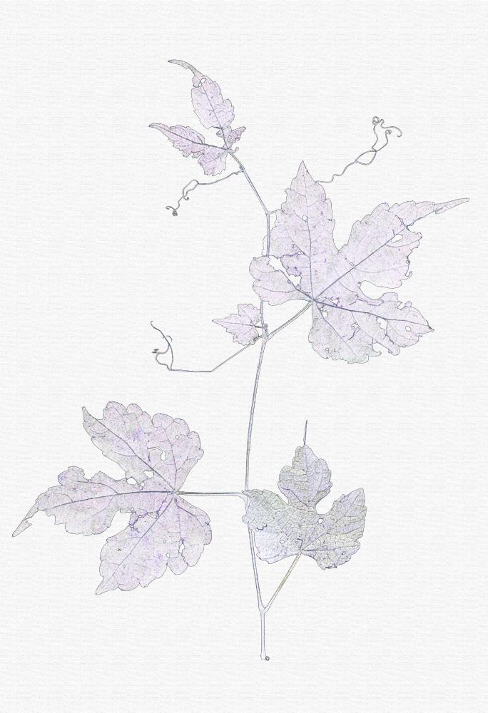 Jacqueline Slavney, Leaf Lines 8+9