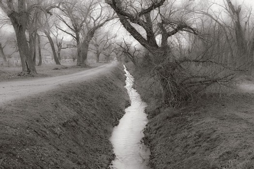 Cottonwoods & Ditch