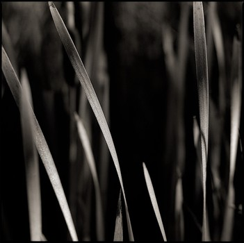 Marsh Grass at Fly-In Lake