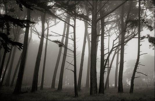 Trees In The Mist, Presidio San Francisco