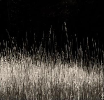 Meadow Grass, Calaveras Big Trees