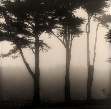 Trees in Mist, Presidio