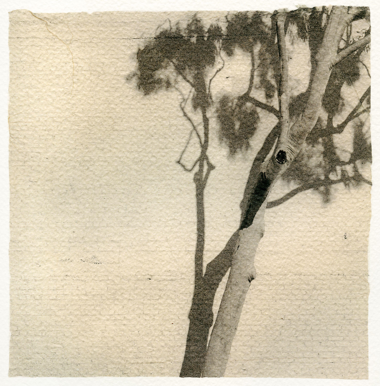 Sara Yerkes, Chapala Tree