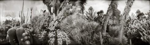 cactus garden at huntington gardens