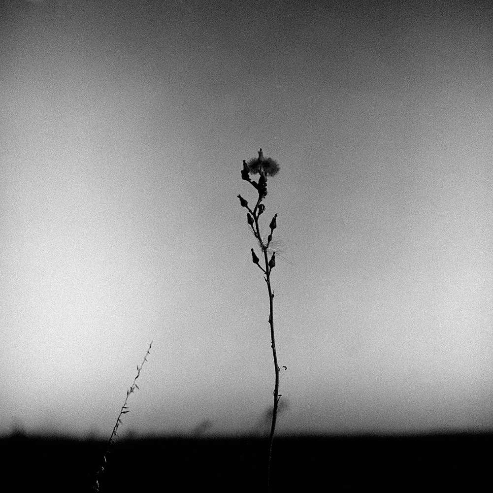 Don Wolfe, Lonely