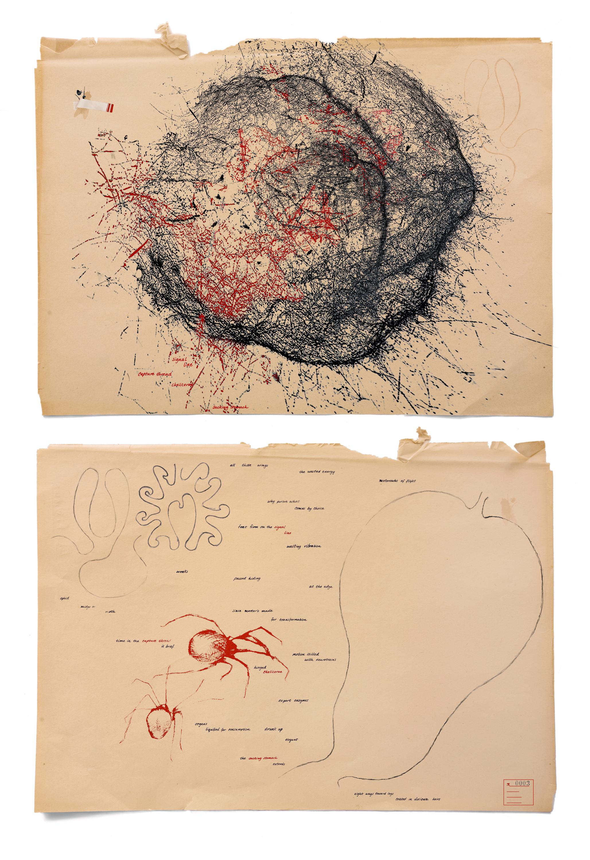 Dianne Kornberg, Arachne 0003