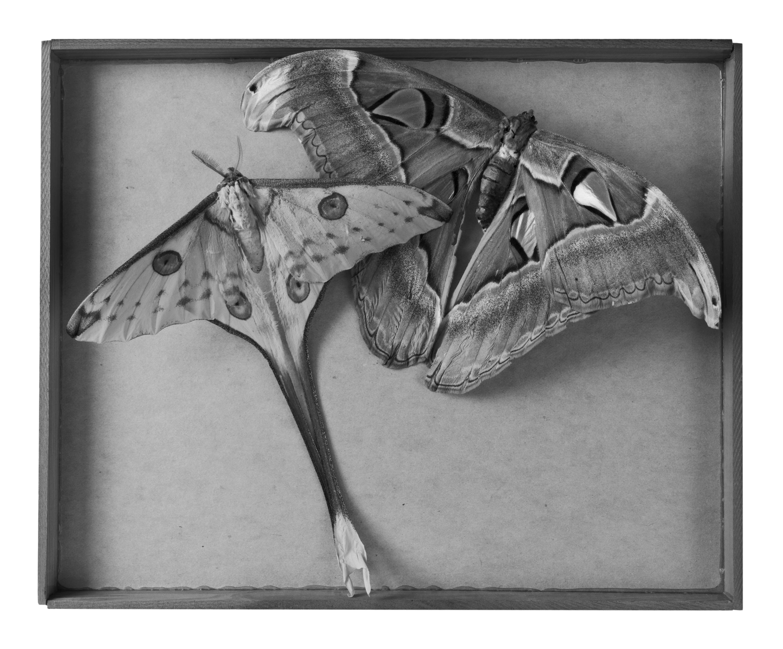 Dianne Kornberg, Insecta 7